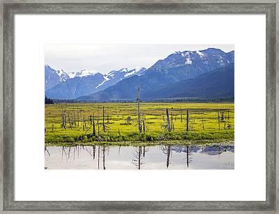 Girdwood Sunken Trees 1 Framed Print by Saya Studios