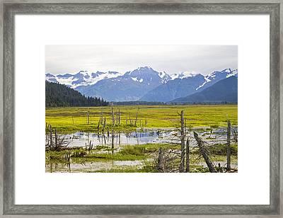 Girdwood Sunken Trees 2 Framed Print