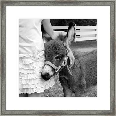Girl And Baby Donkey Framed Print