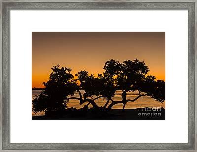 Girl And Tree Framed Print