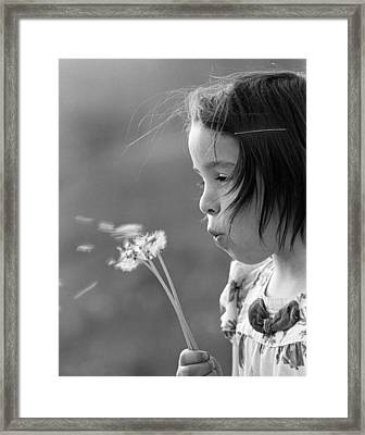 Girl Blowing On Dandelion C.1970s Framed Print by H. Armstrong Roberts/ClassicStock