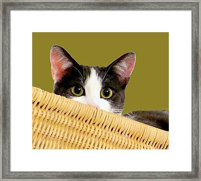 Framed Print featuring the photograph Girlie Cat  by Janette Boyd