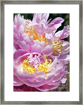 Framed Print featuring the photograph Girly Girls by Lilliana Mendez