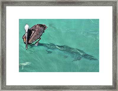 Framed Print featuring the photograph Give A Guy Some Room by Rosemary Aubut