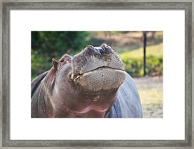 Framed Print featuring the photograph Give Me A Kiss Hippo by Eti Reid