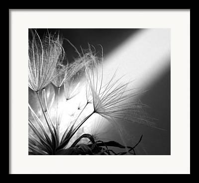 Give Me Flowers Framed Prints