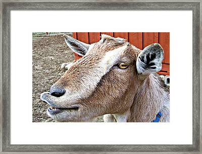 Give Us A Kiss Framed Print by Barbara S Nickerson