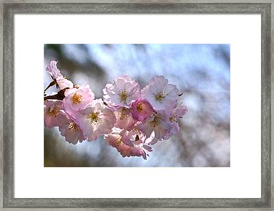 Giving Thanks Framed Print by Byron Varvarigos