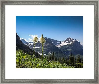 Glacier Grass Framed Print