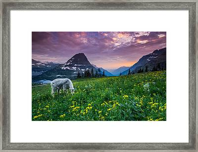 Glacier National Park 4 Framed Print by Larry Marshall