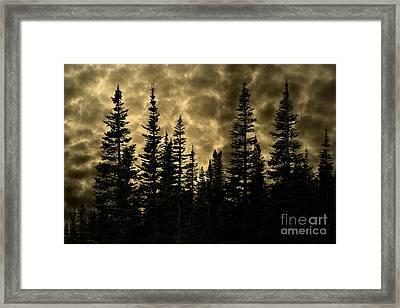 Glacier National Park Dramatic Golden Evergreen Twilight Framed Print by John Stephens
