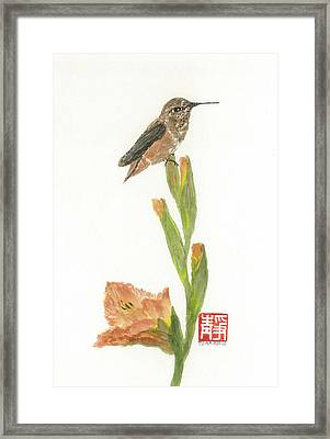 Glad Hummingbird  Framed Print