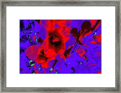 Gladiola Abstract Framed Print by Will Borden