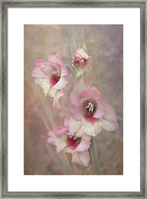 Gladiola Framed Print by Angie Vogel