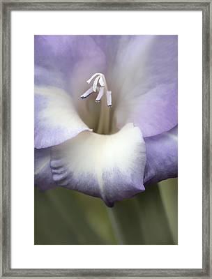Gladiola Flower Lavender  Framed Print by Jennie Marie Schell