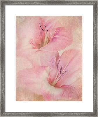 Gladiola IIi Framed Print by David and Carol Kelly