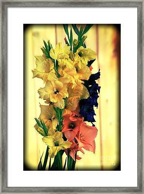 Framed Print featuring the photograph Gladiolus  2013 by Marjorie Imbeau