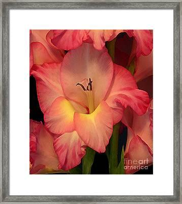 Gladiolus  Framed Print by Annlynn Ward