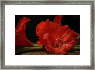 Gladiolus II Intimate Framed Print