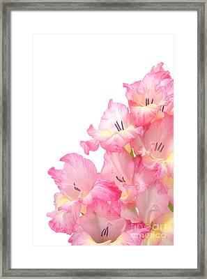 Gladiolus Framed Print by Olivier Le Queinec