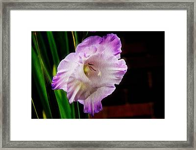 Gladiolus - Summer Beauty Framed Print