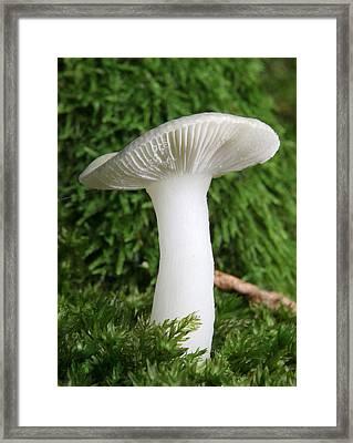Glamis Toadstool Framed Print