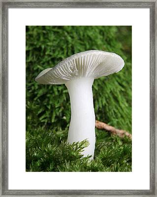 Glamis Toadstool Framed Print by John Topman