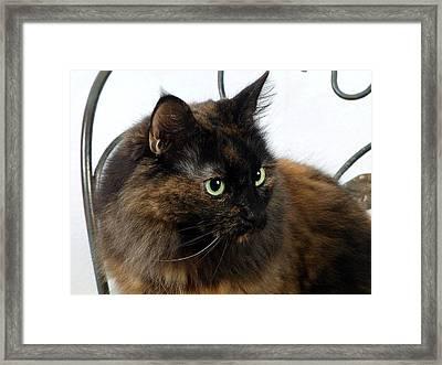Glamor Kitty Framed Print by Camille Lopez