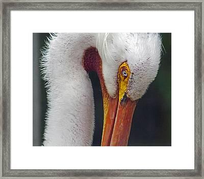 Glamorous White Framed Print