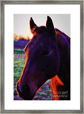 Framed Print featuring the photograph Glamour Shot by Robert McCubbin