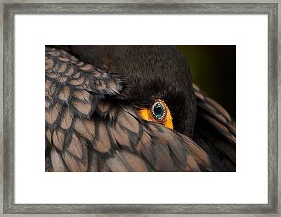Glancing Framed Print
