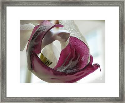 Glass Beauty Framed Print
