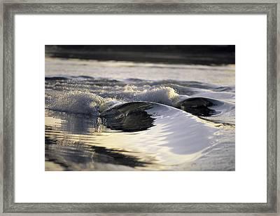 Glass Bowls Framed Print by Sean Davey