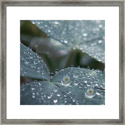 Glass Daisies Framed Print