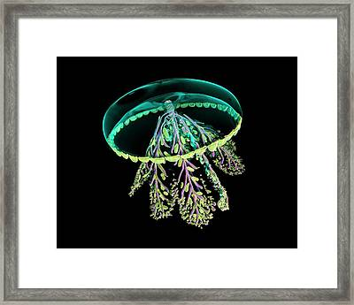 Glass Jellyfish Model Framed Print by Dan Sykes/natural History Museum, London