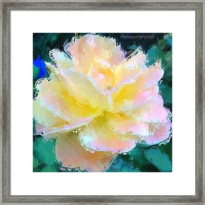 Glazed Pale Pink And Yellow Rose  Framed Print by Anna Porter