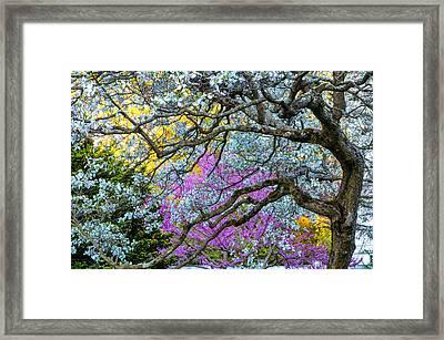 Glen Magna Bloom Framed Print