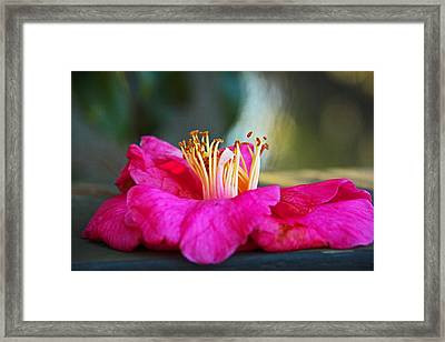 Framed Print featuring the photograph Glencairn Garden 020 by Andy Lawless