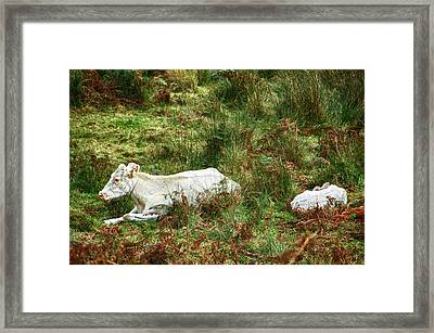Framed Print featuring the photograph Glendalough Cattle 2 by Trever Miller