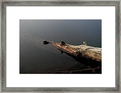 Glen's Log Framed Print by Joseph Yarbrough
