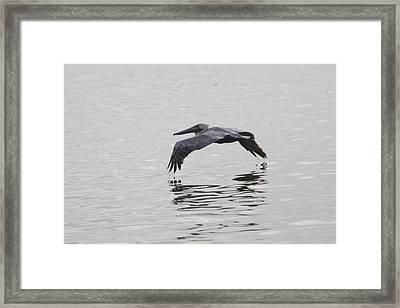 Glide Framed Print by Charles Warren