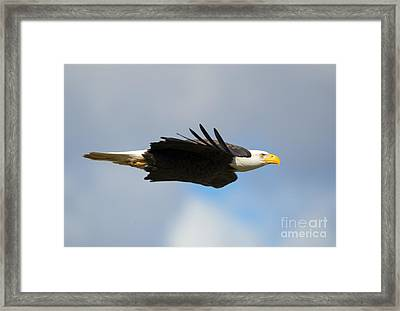 Glide Framed Print by Mike Dawson