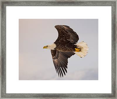 Glide Profile Framed Print
