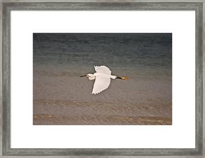 Gliding Bird Framed Print by Paulina Szajek