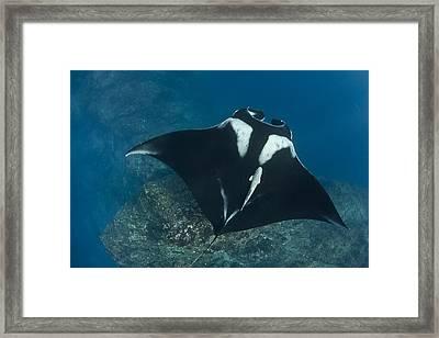 Gliding Framed Print by David Valencia
