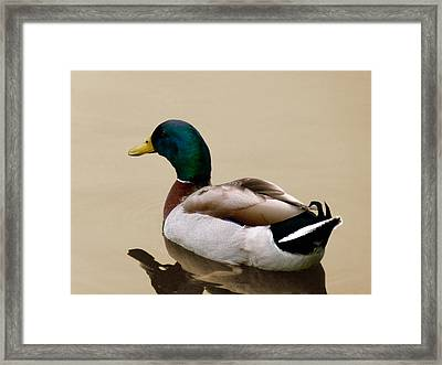 Framed Print featuring the photograph Gliding by Frank Bright