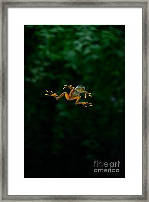 Gliding Frog In Flights Framed Print by Scott Linstead