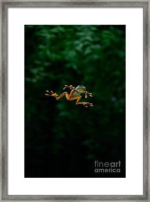 Gliding Frog In Flights Framed Print by Scott Linstead