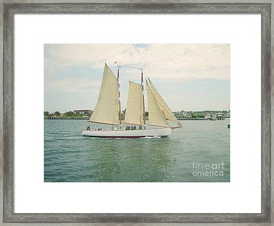 Gliding In Full Sail Framed Print