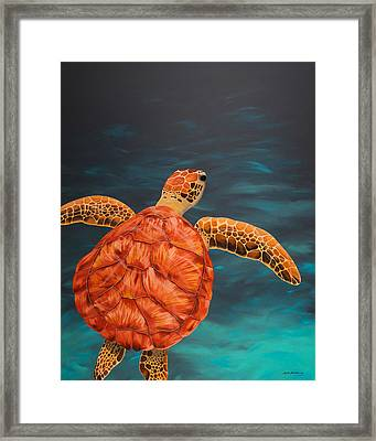 Gliding Into The Turquoise Framed Print by Matthew Haddaway